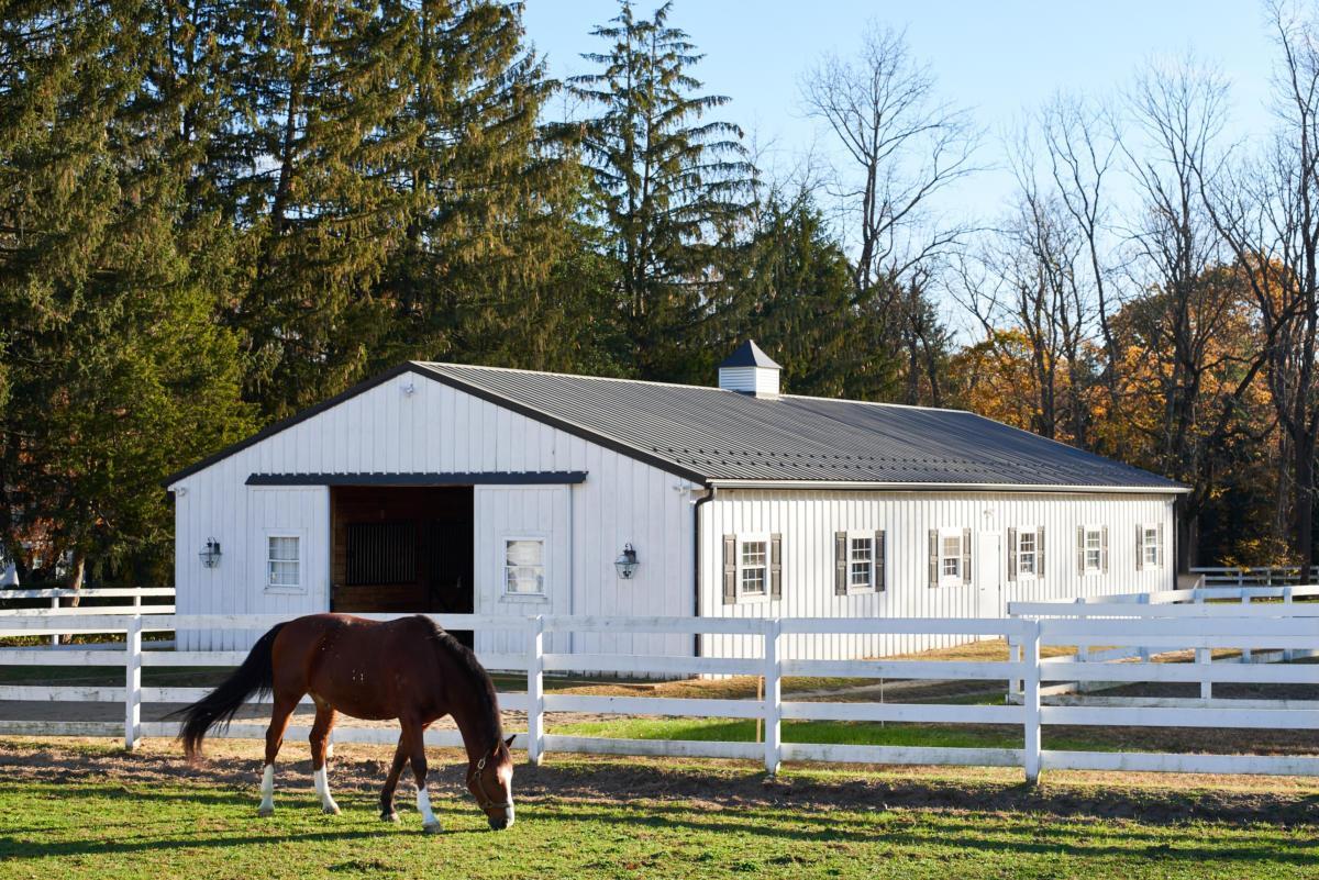 Gleneayre Farm (13)